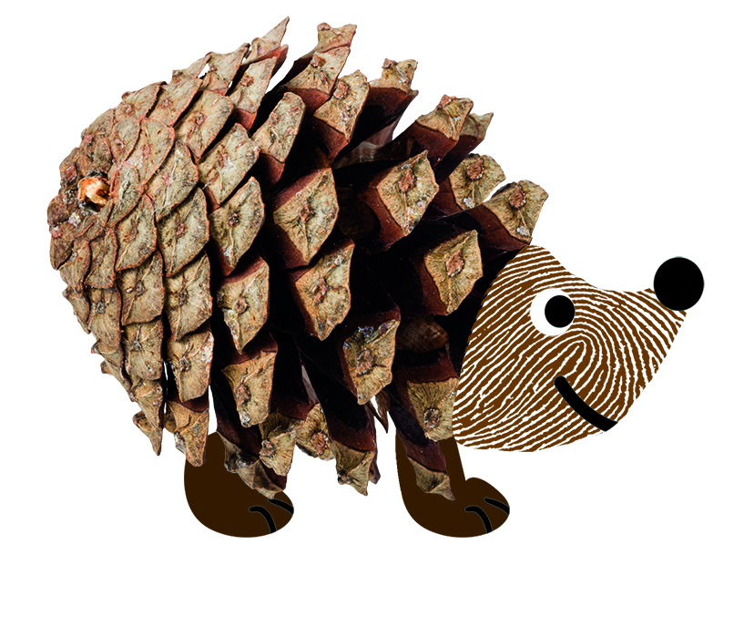 6. Hedgehog